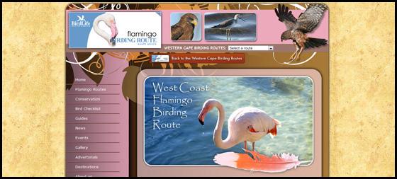 Flamingo Birding route theme, Western Cape Birding